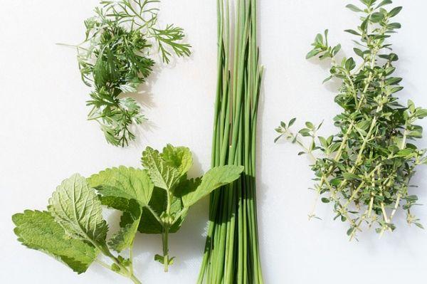 sušenje ljekovitog bilja