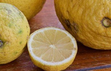 Limun plod